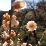 春と修羅   まことのことばは ここになく 修羅のなみだはつちにふる